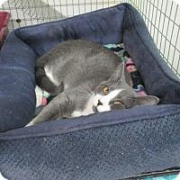 Adopt A Pet :: BlueBell - Reeds Spring, MO