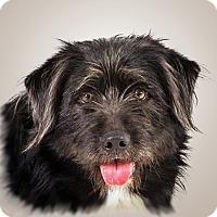 Adopt A Pet :: Keeno - Prescott, AZ