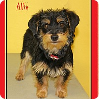 Adopt A Pet :: Allie - Hillsboro, TX