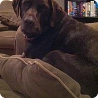 Adopt A Pet :: Wrangler - Charlotte, NC