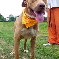 Adopt A Pet :: Thunder - St. Francisville, LA
