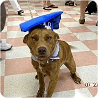 Adopt A Pet :: Max - Washington, NC