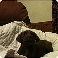 Adopt A Pet :: Lena - Glastonbury, CT