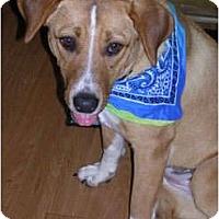 Adopt A Pet :: Presley - Glastonbury, CT