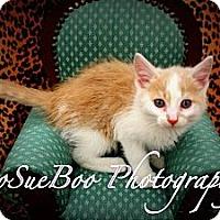Adopt A Pet :: Cullen - Warren, MI