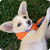 Adopt A Pet :: Sprout - Toluca Lake, CA