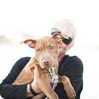 Adopt A Pet :: Elsa - Reisterstown, MD