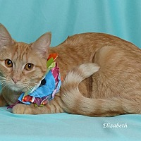 Adopt A Pet :: Elizabeth - Kerrville, TX