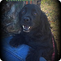 Adopt A Pet :: Clintock - Denver, NC