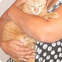 Adopt A Pet :: Jasper - Pensacola, FL