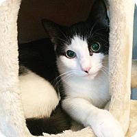 Adopt A Pet :: Nolan - TRIAL ADOPTION - East Brunswick, NJ