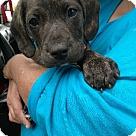 Adopt A Pet :: MacDermott
