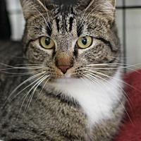 Adopt A Pet :: Ginny - Winston-Salem, NC