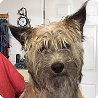 Adopt A Pet :: Jenkins - Canoga Park, CA
