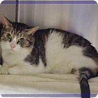 Adopt A Pet :: CODY - Marietta, GA