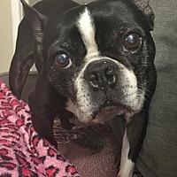 Adopt A Pet :: Bandit - Courtland, AL