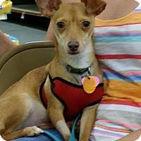Adopt A Pet :: Scooby - Gretna, FL