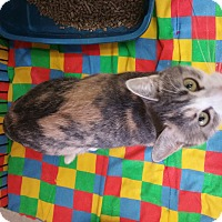 Adopt A Pet :: Verna - Chippewa Falls, WI