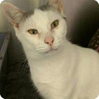 Adopt A Pet :: Emily - Richboro, PA