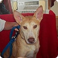 Adopt A Pet :: Hubble - Sardis, TN