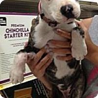 Adopt A Pet :: Wego - Mesa, AZ