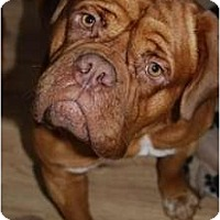 Adopt A Pet :: Fiona - Phoenix, AZ