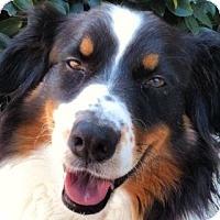 Adopt A Pet :: Miller - Savannah, GA
