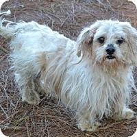 Adopt A Pet :: Millie - Athens, GA