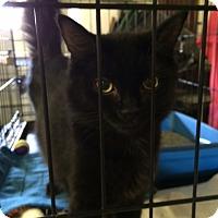 Adopt A Pet :: Nocturn - Byron Center, MI