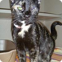 Adopt A Pet :: Sardine - Hamburg, NY