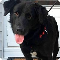 Adopt A Pet :: Oscar - New Canaan, CT