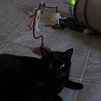 Adopt A Pet :: Rodney - Quincy, MA