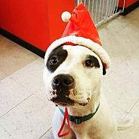 Adopt A Pet :: Leggo - Whitestone, NY