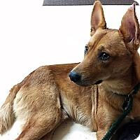 Adopt A Pet :: Odin (fostered in Houston) - Cranston, RI