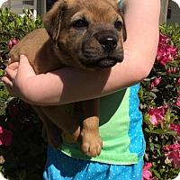 Adopt A Pet :: Maxwell - Brunswick, ME