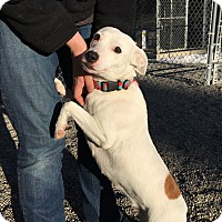 Adopt A Pet :: Puppy Girl - Rathdrum, ID