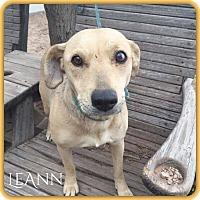 Adopt A Pet :: LeAnn - DeForest, WI