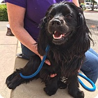 Adopt A Pet :: Humphrey---COURTESY LISTING - Fort Worth, TX