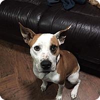 Adopt A Pet :: Olive - Seattle, WA