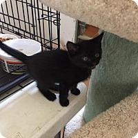 Adopt A Pet :: Jill - Alpharetta, GA