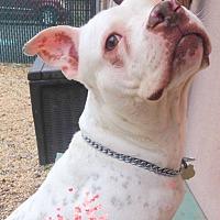 Adopt A Pet :: GEORGIA - Tinton Falls, NJ