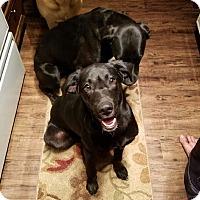 Adopt A Pet :: Case & Winston - Groton, MA
