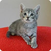 Adopt A Pet :: Zakari - Springfield, IL