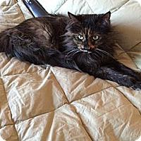 Adopt A Pet :: Casey - Laguna Woods, CA