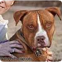 Adopt A Pet :: TROOPER - Phoenix, AZ