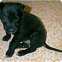 Adopt A Pet :: JULIE - dewey, AZ