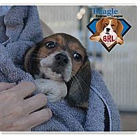 Adopt A Pet :: PUPPIES - Yardley, PA