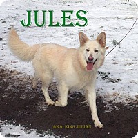 Adopt A Pet :: Jules - Adopted - June 2015 - Huntsville, ON