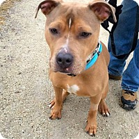 Adopt A Pet :: Hoover - Cary, IL