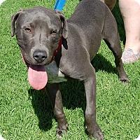Adopt A Pet :: Grayson - West Los Angeles, CA